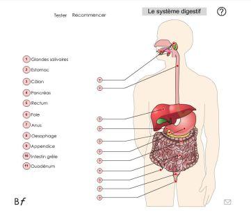 biologie-en-flash-pour-reviser