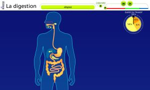 la-digestion-bilan